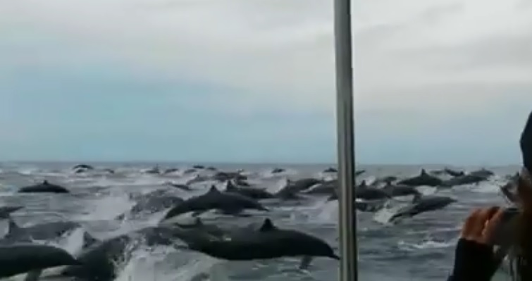Il filme un banc de dauphins absolument gigantesque (Costa Rica)