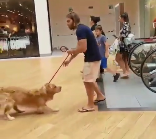 Ce chien refuse de monter sur un escalator mais son maitre à la solution